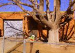 Foreclosed Home in Albuquerque 87107 LA POBLANA RD NW - Property ID: 4250267116